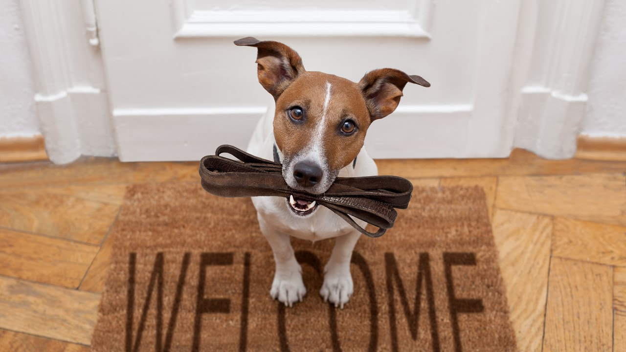 Picture of a Jack Russell Terrier on a welcome floor matt in front of an apartment in lafayette la